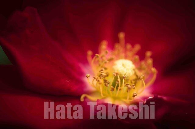【A-89】A-4サイズ 3枚 1セット 1800円【送料無料】草花のアート写真の画像1枚目