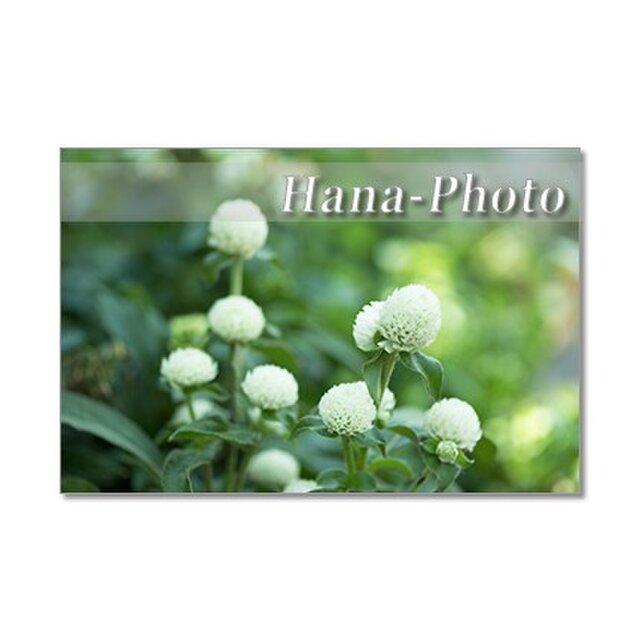1332) 白い花と赤い花 ポストカード5枚組の画像1枚目