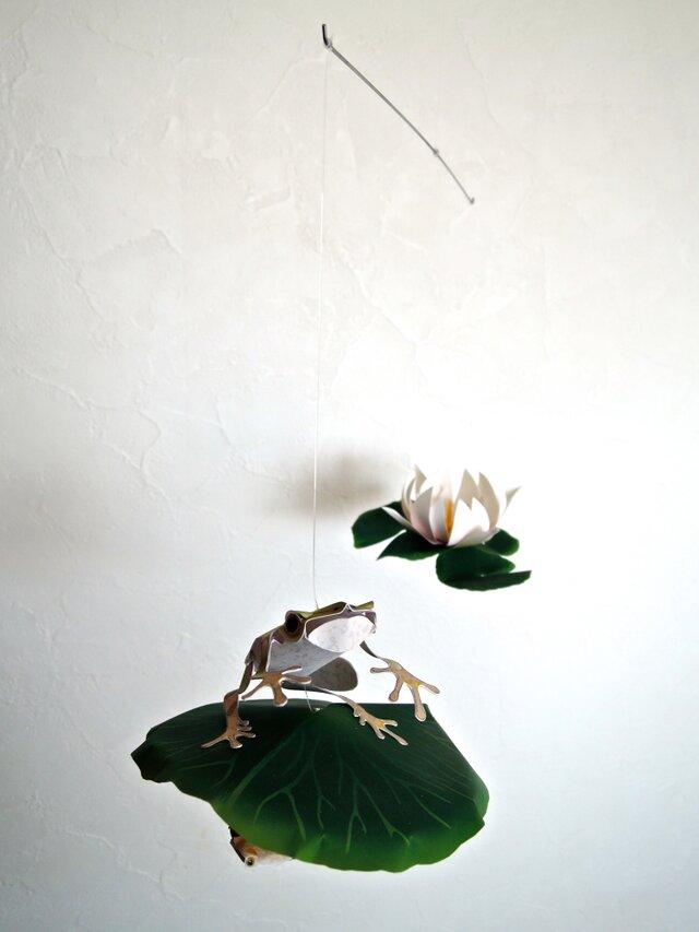 スイレン池のカエルの画像1枚目