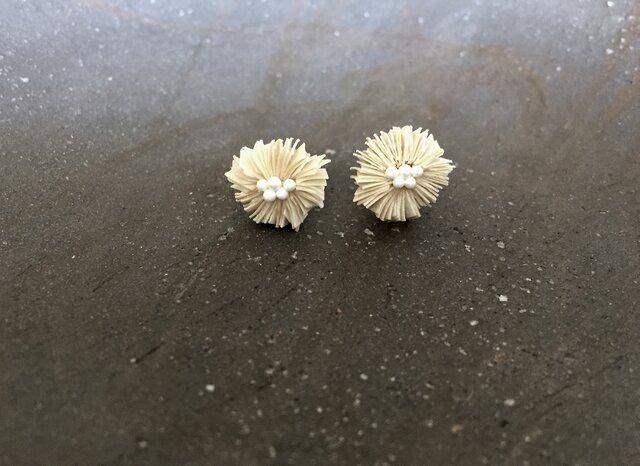 parchment flower:01の画像1枚目