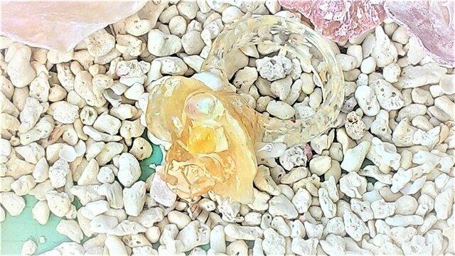 【sale】ナミマガシワとヒトデ殻のお花のリング(黄)の画像1枚目