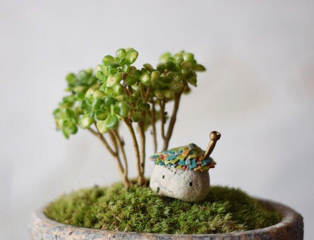 小人の庭(平屋とアイクリン錦)の画像1枚目