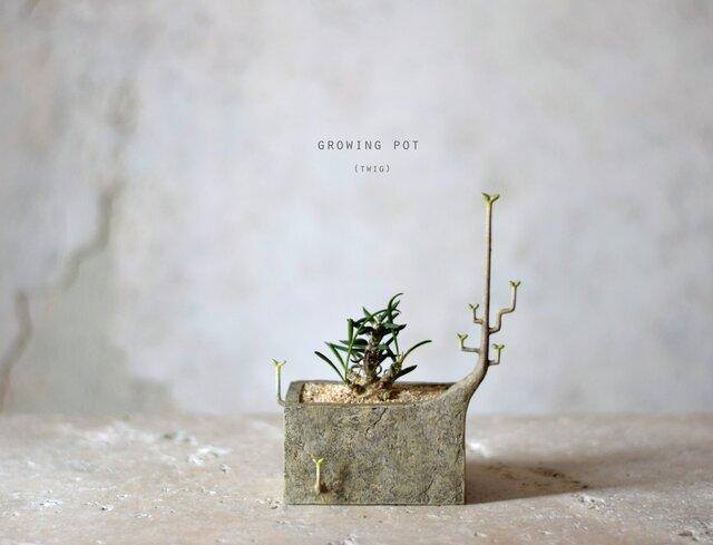 日々育ってゆく植物をうらやましく思い,ついに見よう見真似で自ら成長をはじめたプランター(けど少し間違っている)(square)の画像1枚目