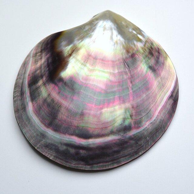 大きな黒蝶真珠貝 シェル 皿 1枚の画像1枚目