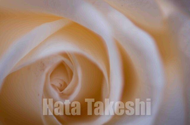 【A-91】A-4サイズ 3枚 1セット 1800円【送料無料】草花のアート写真1の画像1枚目