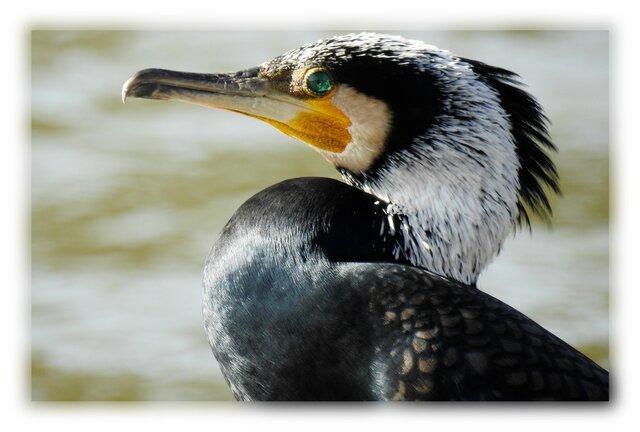 No.92 身近な野鳥たち その2 ポストカード5枚組 の画像1枚目