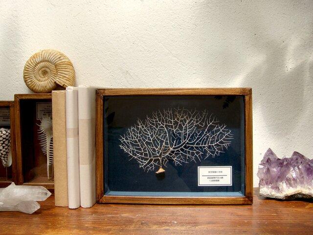 軟質珊瑚の骨格標本(白)その弐。の画像1枚目