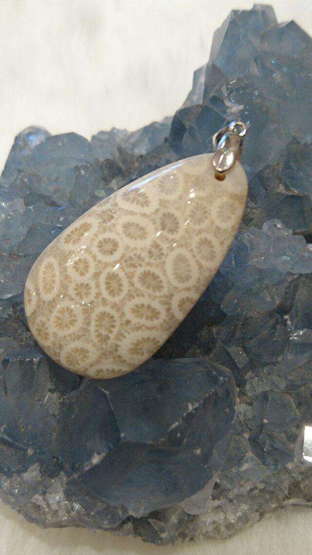 コーラルアゲート 花サンゴの化石 ペンダントトップ silverの画像1枚目