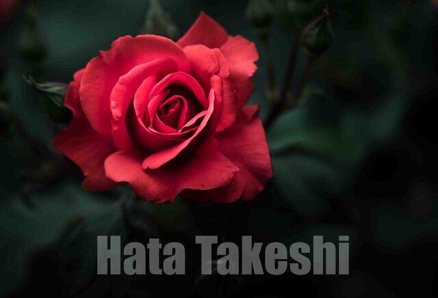【A-93】A-4サイズ 3枚 1セット 1800円【送料無料】草花のアート写真1の画像1枚目
