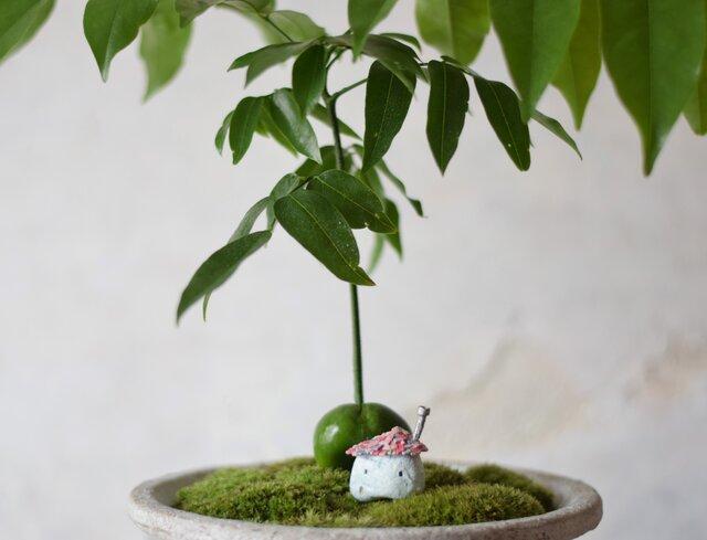 小人の庭(平屋)ジャックと豆の木の画像1枚目