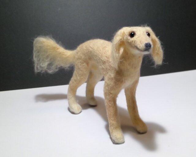 サルーキの子犬(売約済み)の画像1枚目