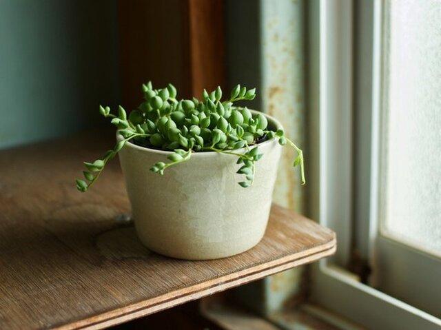 白橡釉 植木鉢の画像1枚目