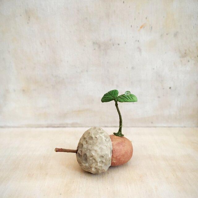 2304.bud 粘土のどんぐりの画像1枚目