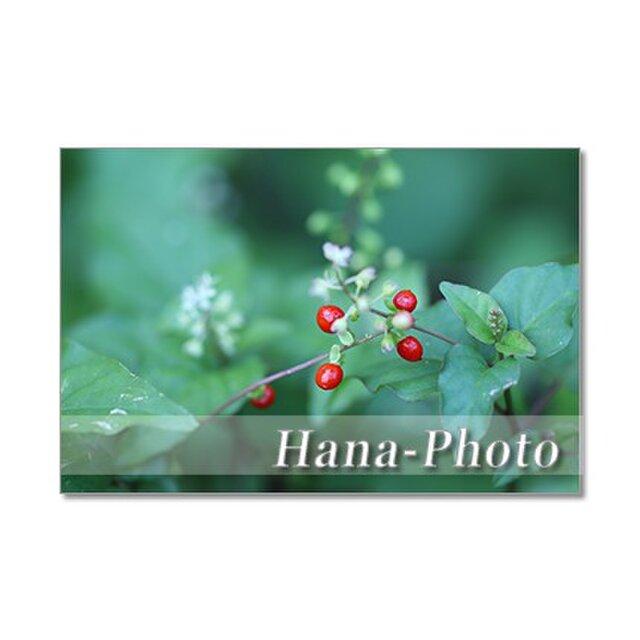 1342)唐辛子、小さな赤い実、ダリヤ  ポストカード5枚組の画像1枚目
