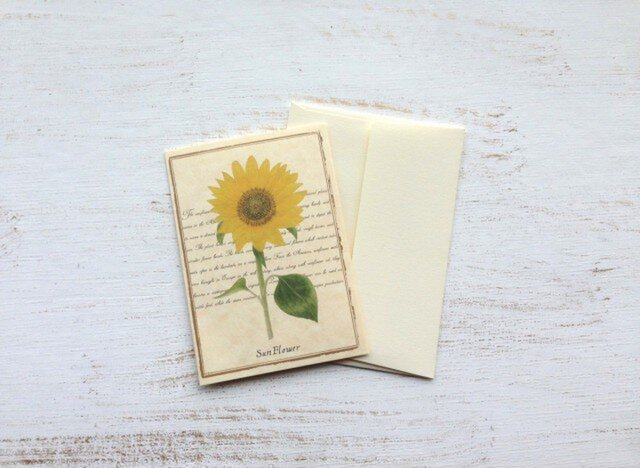 ボタニカル グリーティングカード 2セット ひまわりの画像1枚目