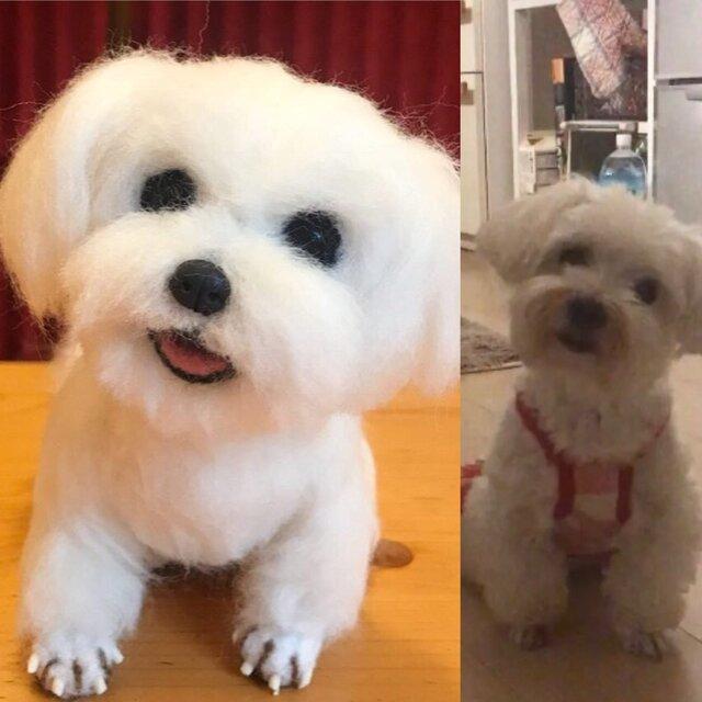 羊毛フェルト☆オーダー ペット 愛犬 愛猫の画像1枚目