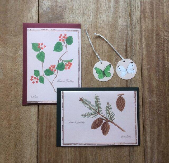 greeting card / さんきらい 松ぼっくり グリーティングカード 植物画の画像1枚目