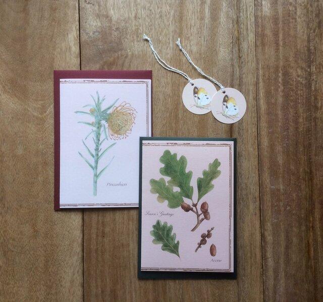 greeting card / どんぐり ピンクッション グリーティングカード 植物画の画像1枚目
