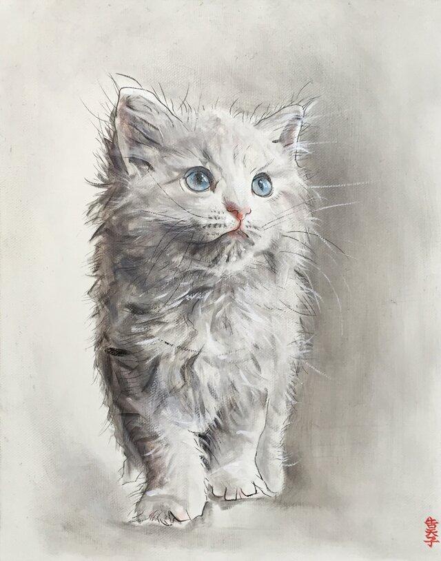 猫の画像1枚目