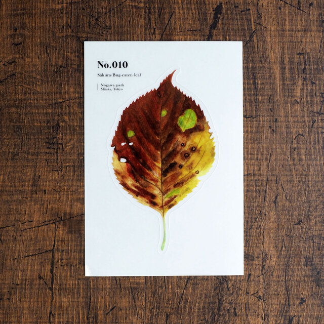 No.010 Sakura Bug-eaten leaf 透明ステッカーの画像1枚目