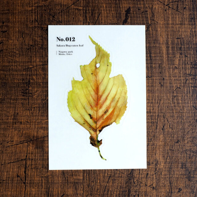 No.012 Sakura Bug-eaten leafの画像1枚目