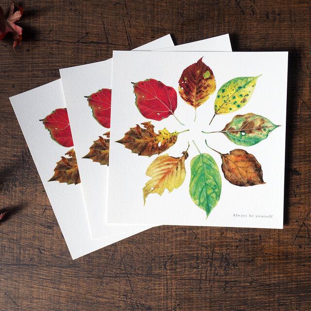 美しい葉のポストカード 正方形の画像1枚目