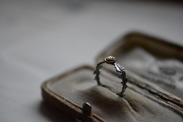 dandelion ringの画像1枚目