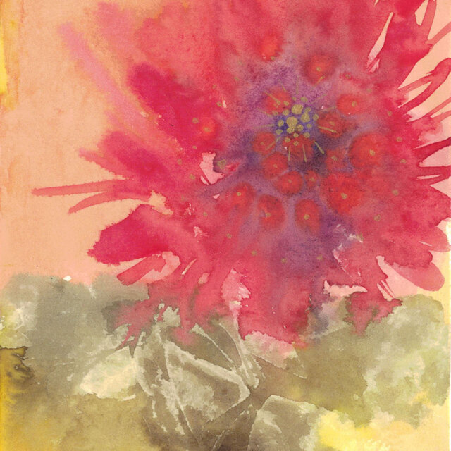 赤い花-red flower-の画像1枚目