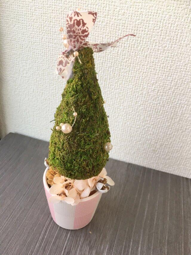 三角モスとピンクのミニクリスマスツリー【プリザ+ドライ】の画像1枚目