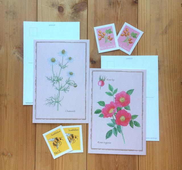 ボタニカル ポストカード & 切手風シール/カモミールと蜂・ローズとローズヒップ(各2枚)花 植物画の画像1枚目
