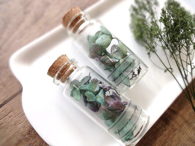 植物標本 Botanical Collection■No.3-C 紫陽花 ブルーパープルの画像1枚目