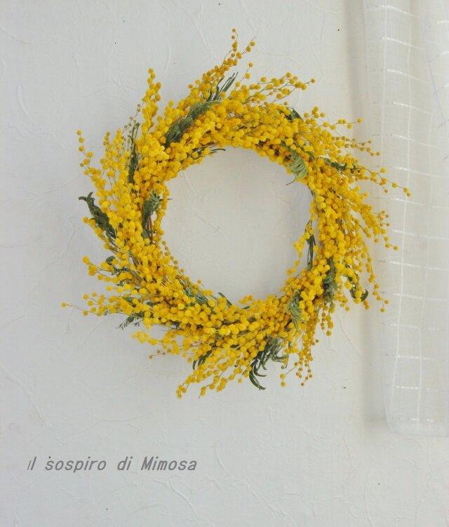 Ballando Mimosaの画像1枚目