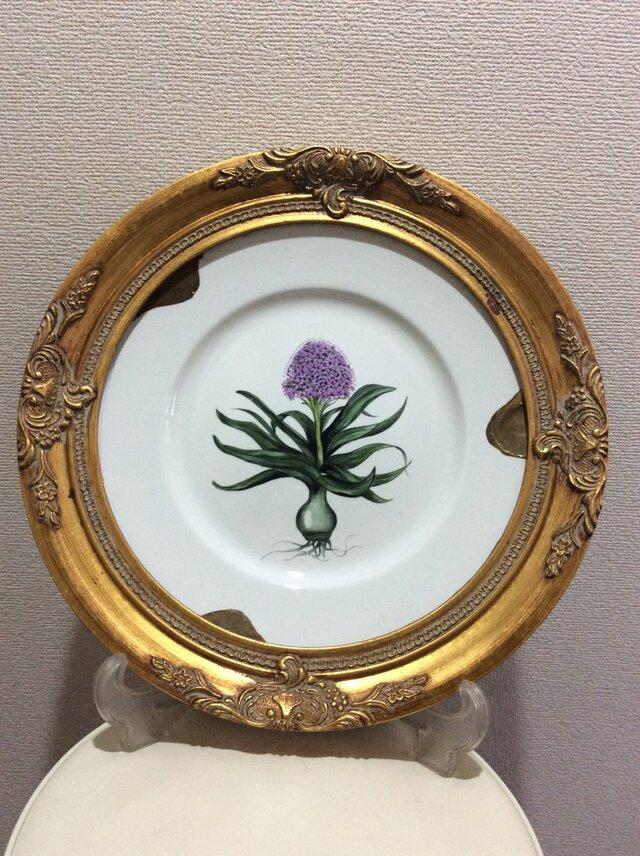 オオツルボの花と球根の絵皿の画像1枚目