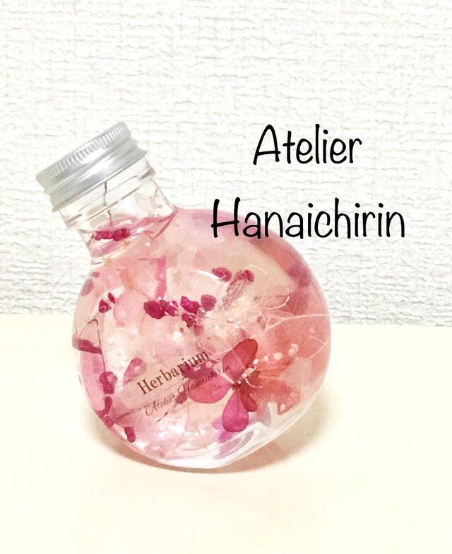 ころんとハーバリウム  Sakura hubukiの画像1枚目