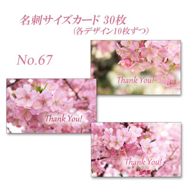 No.67 河津桜   名刺サイズサンキューカード  30枚の画像1枚目