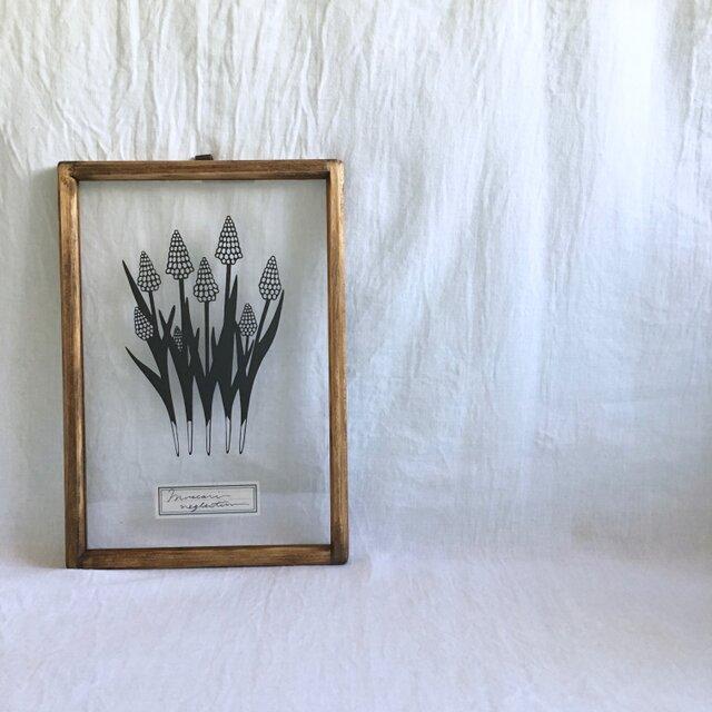 【植物標本シリーズ】ムスカリの切り絵フレームの画像1枚目