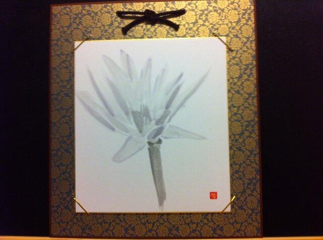 可憐な蓮の花の画像1枚目