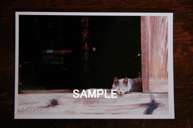 ポストカード 「ねこ。」  3枚の画像1枚目