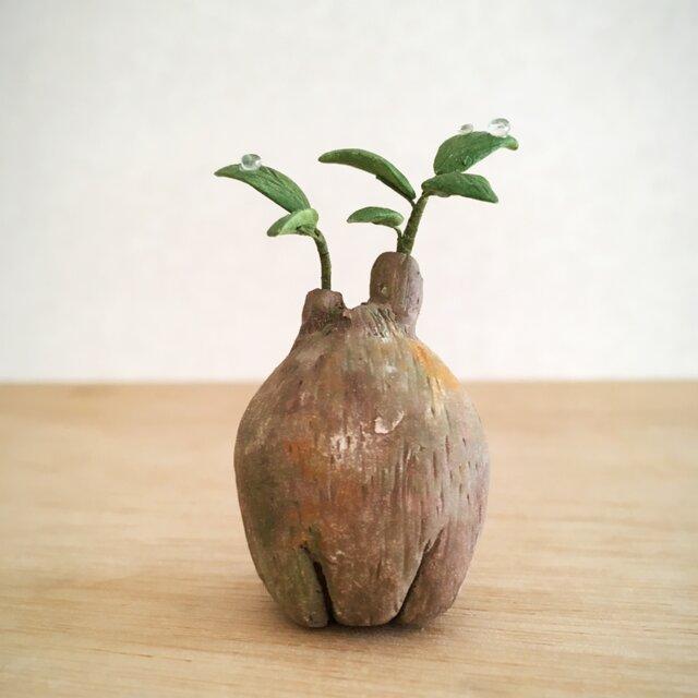 2787.bud 粘土の塊根植物の画像1枚目