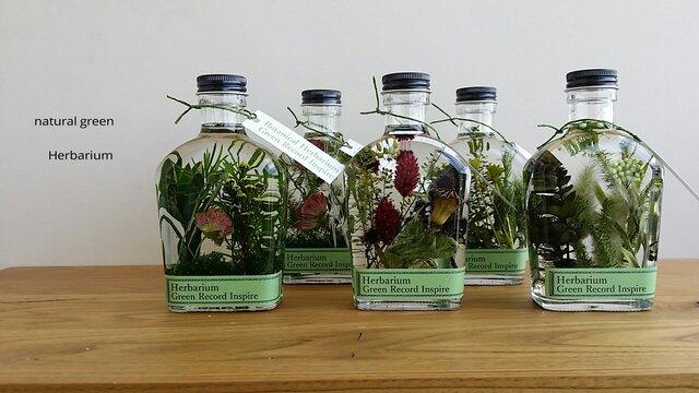 ハーバリウム・グリーンプランツの草花景色2♬の画像1枚目