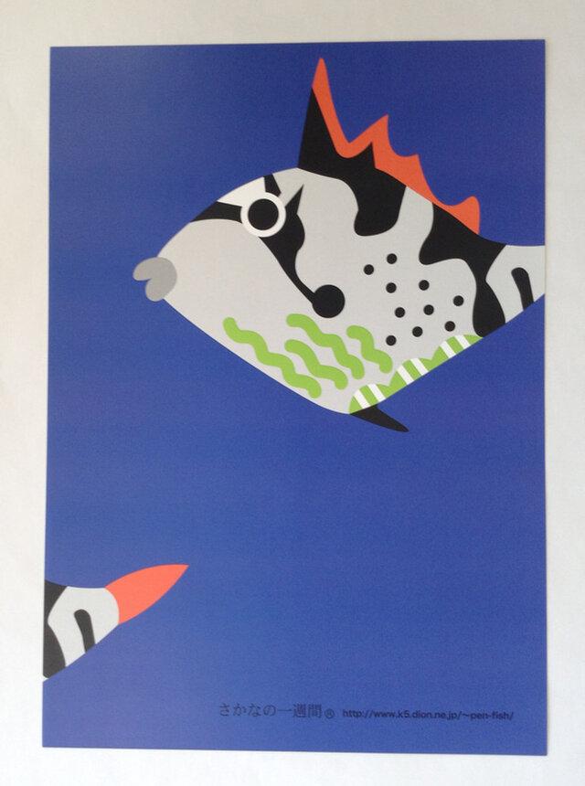 A3サイズポスタ− きへりもんがら幼魚  (フレ−ムなし)の画像1枚目
