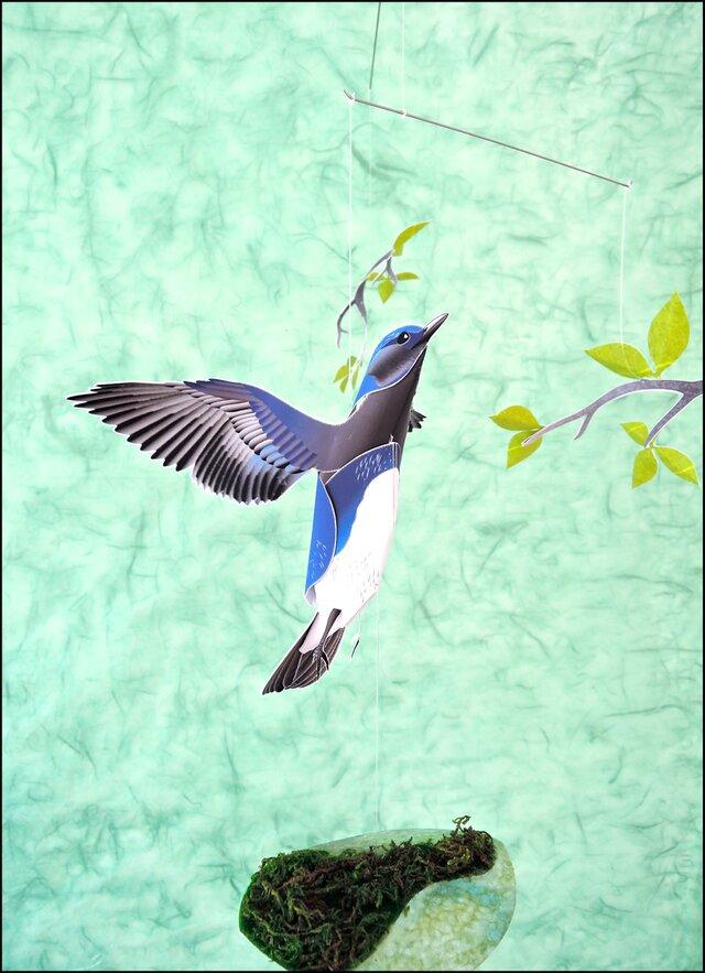 新緑と青い鳥(オオルリ)の画像1枚目