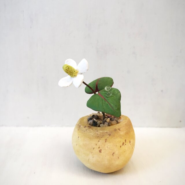 2807.bud 粘土の鉢植え ドクダミの画像1枚目