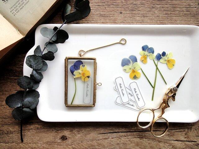植物標本 ■押し花フレーム ガーランド■Short Slim 三色スミレの画像1枚目