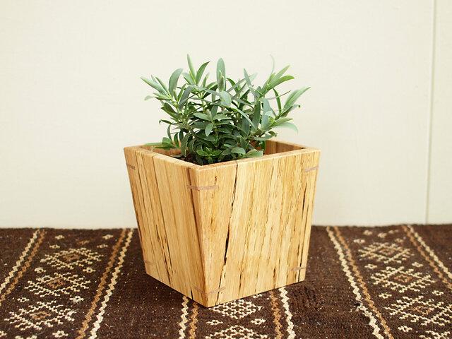 木製 鉢カバー 樫材 3号鉢用 植木鉢カバー スポルテッドの画像1枚目