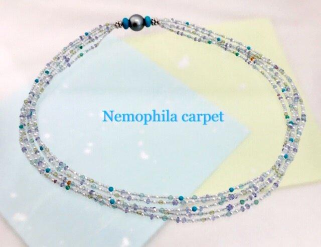 Nemophila carpet(ネモフィラカーペット)の画像1枚目