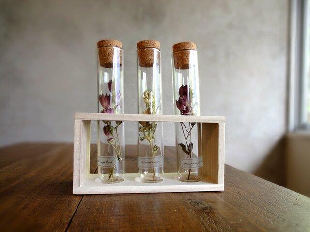 植物標本 Botanical Collection■フレームボックス入りガラス管■アストランチア 3品種セットの画像1枚目