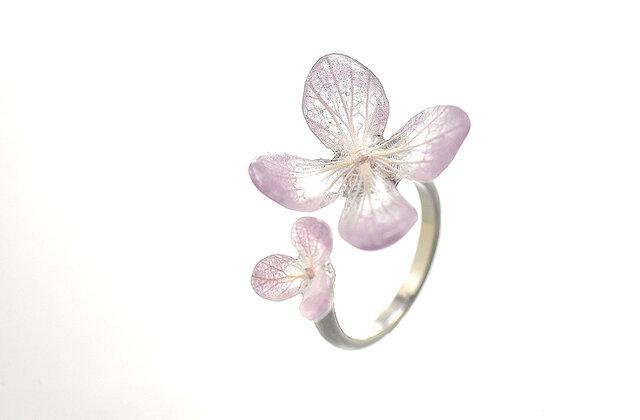 アジサイ【スミレグラデーション】ふたつの花弁のオープンリングの画像1枚目