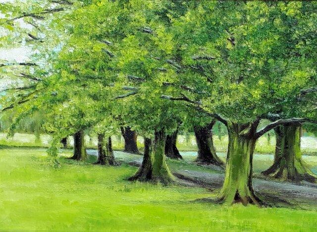 緑の小道の画像1枚目