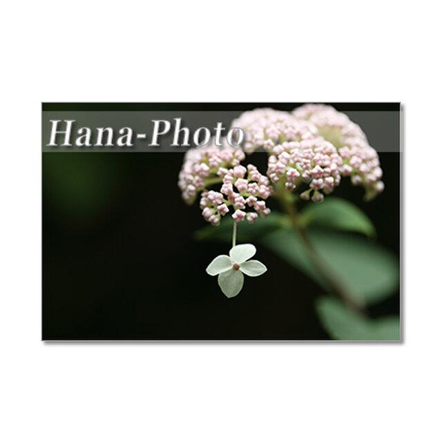 1360) 美しい紫陽花たち  ポストカード5枚組の画像1枚目